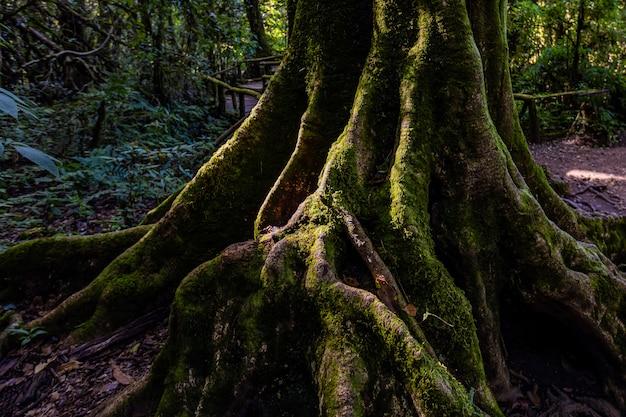 Свет и тень тропического леса в doi inthanon, чианг май, таиланд
