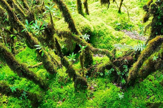 森林の保全性。 doi inthanon国立公園。チェンマイ、タイ