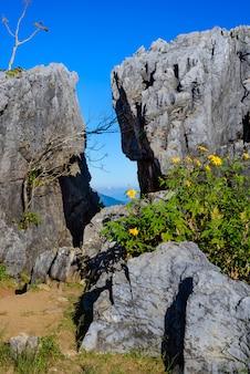 Doi pha tang viewpoint ,chiang rai province in thailand.