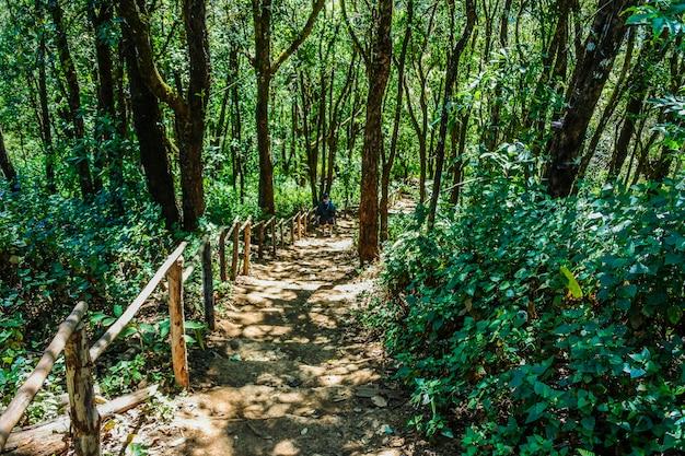 Doi pui ko moutain view point at mae hong son, thailand.