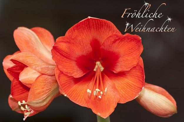 植物学植物doldigerアマリリスの花の花粉