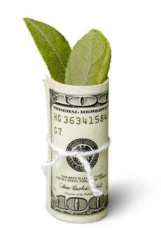 잎이 달린 달러 지폐