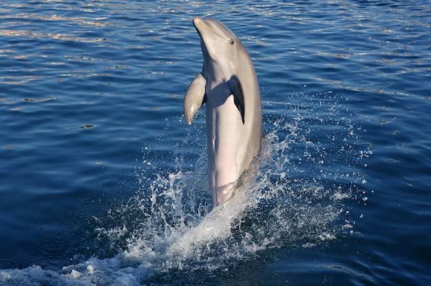 Дельфин занимается акробатикой