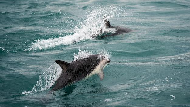 ニュージーランドのイルカ