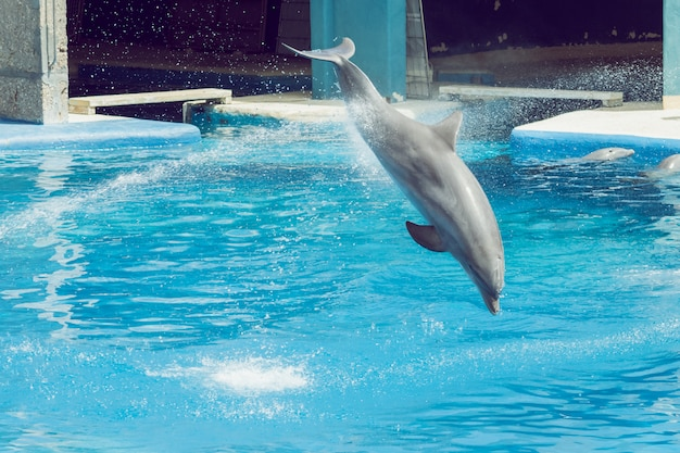 Dolphin jumping in an exhibition splashing water