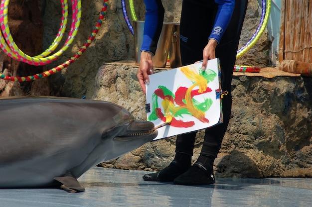 イルカが美しい絵を描く
