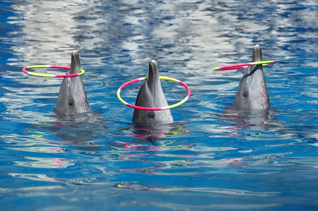 Dolphin show, play hoops in the pool.