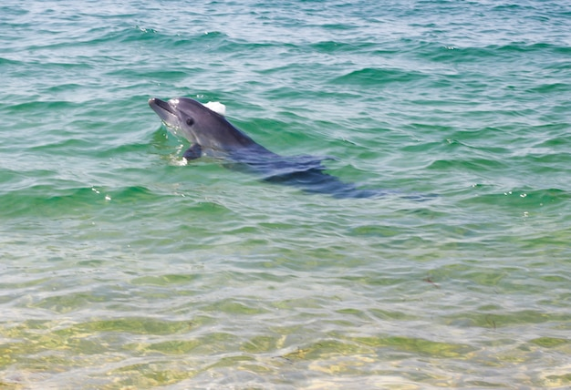 Dolphin splashes in the clear sea