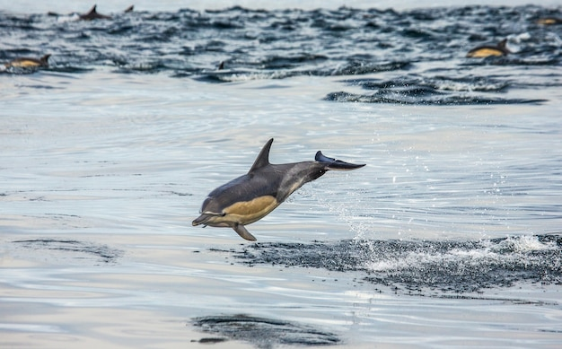 イルカが水から飛び出す
