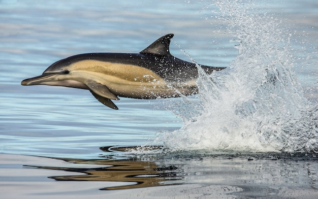 Dolphins jump out of the water