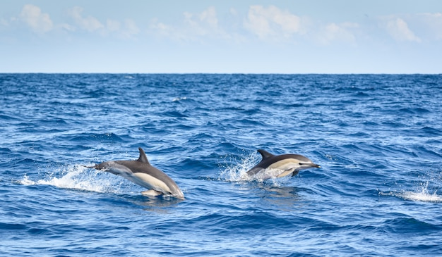 Dolphins surfing on the sea surface