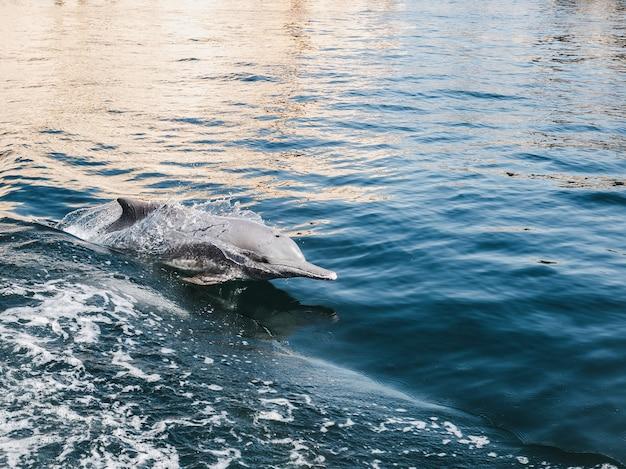 밝은 태양 광선의 배경에 바다 파도에서 수영하는 돌고래.