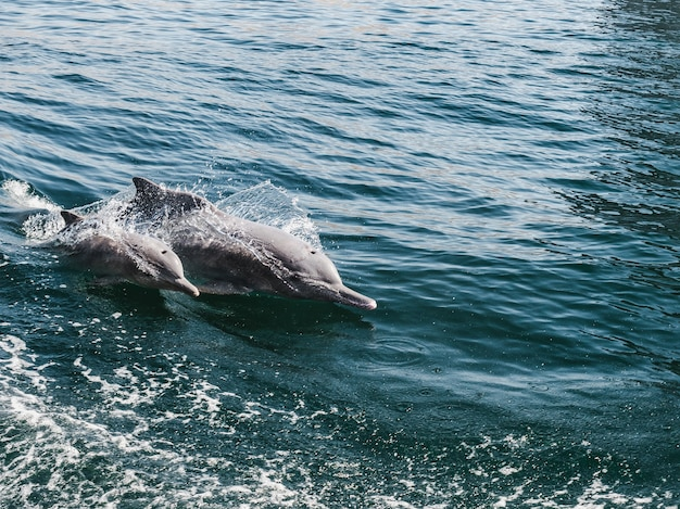 Дельфины купаются в морских волнах на фоне лучей яркого солнца.