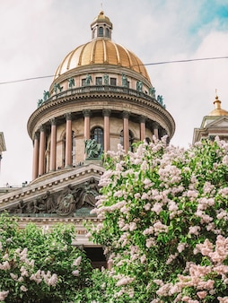 Купол исаакиевского собора под веткой сиреневых цветов в санкт-петербурге