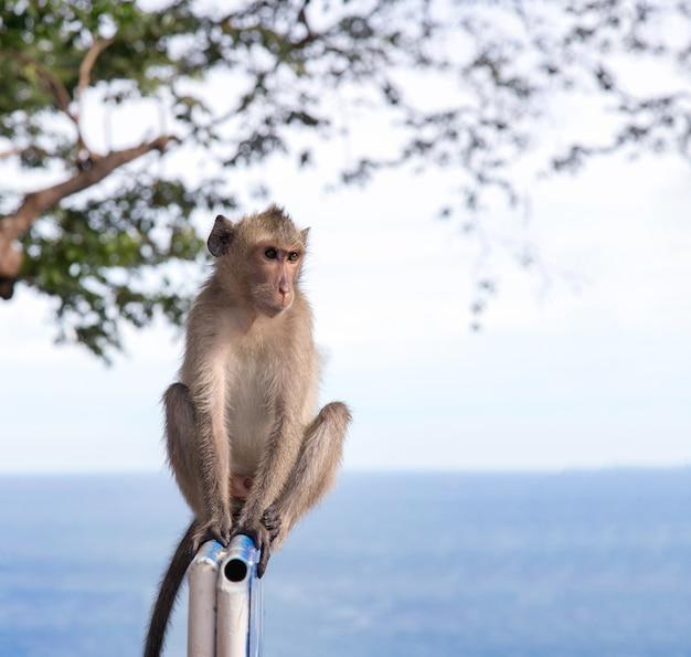 Внутренние азиатские обезьяны шокирующие действия