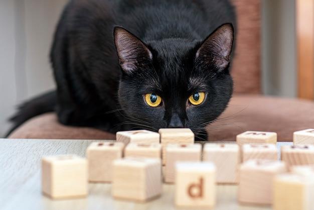 Домашняя черная кошка играет с игрушками деревянными кубиками