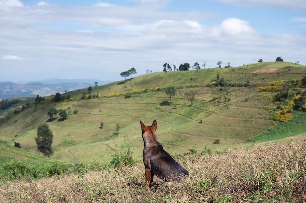 Domestic brown dog sitting on green hill in rural farmland