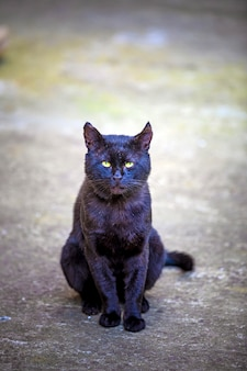 Domestic cat in the backyard