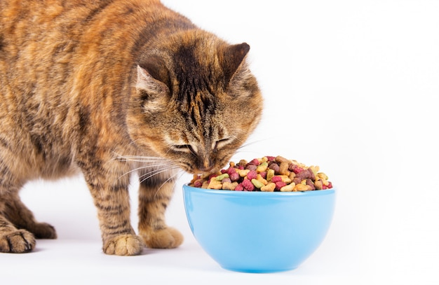 Domestic cat and bowl on white background