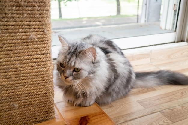 Домашняя кошка охлажденная в кафе