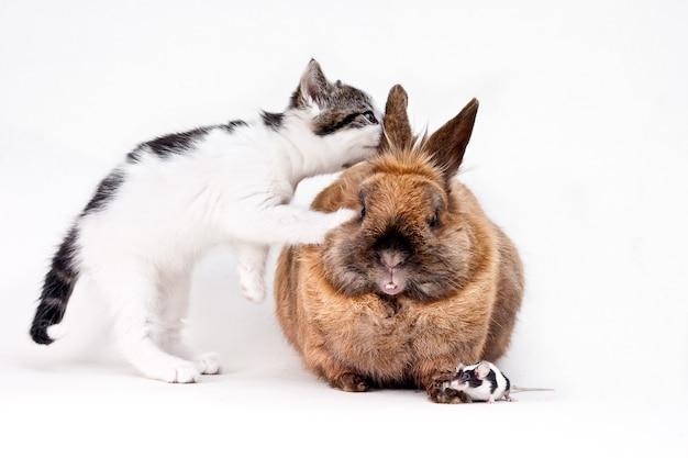 Домашняя кошка с любопытством смотрит в ухо кролику с крошечной мышкой на полу