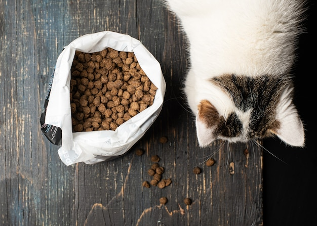 A domestic cat eats dry nutritious food in granules from a packaging bag