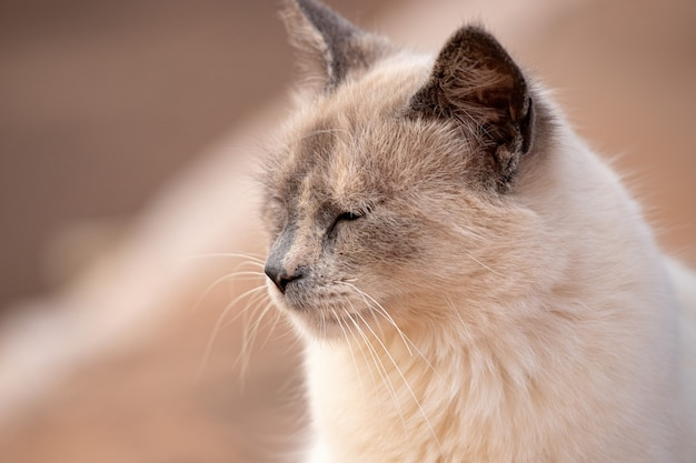 Domestic cat face in close-up with selective focus