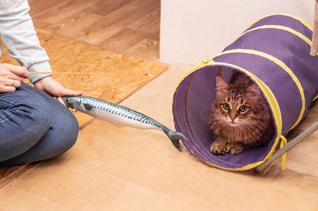 飼い猫はおもちゃの魚と遊ぶために提供され、彼は望んでいません。