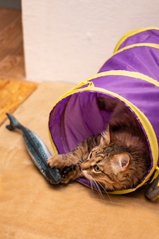 A domestic cat is playing with toy plush fish in a cat's tunnel.