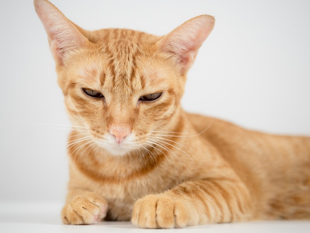 Домашняя кошка лежит на столе, чувствуя себя сонной