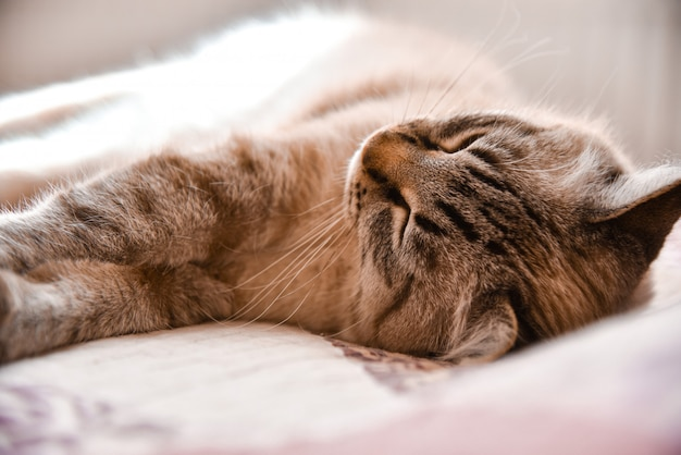 The domestic cat lies on a bed and is heated under sunshine from a window