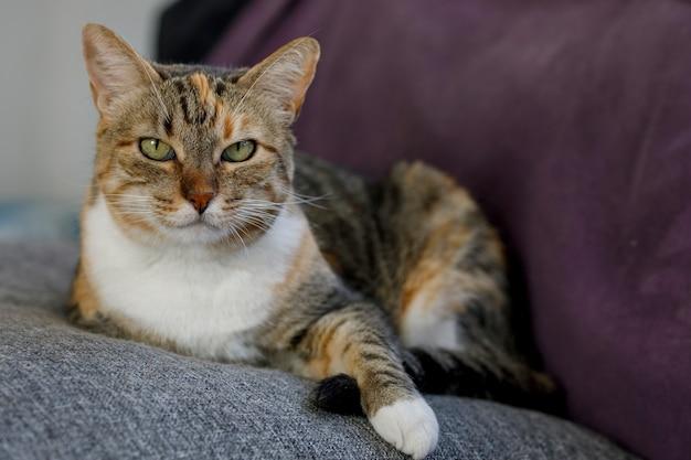 Домашняя кошка расслабилась в гостиной дома домашнее животное отдыхает дома
