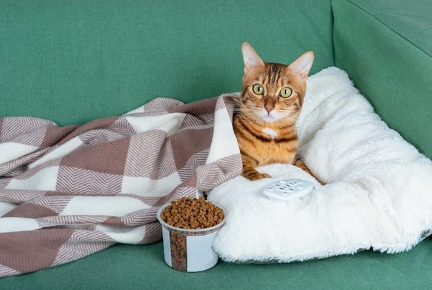 Домашняя кошка отдыхает на диване перед телевизором со стаканом сухого корма и пультом от телевизора.