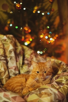A domestic cat relaxing on a cozy couch with christmas decorations
