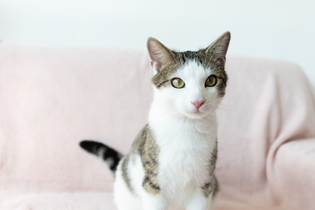 Домашняя кошка сидит на диване