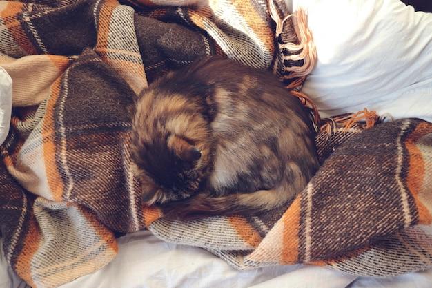Домашний кот, спавший на плохом месте дома