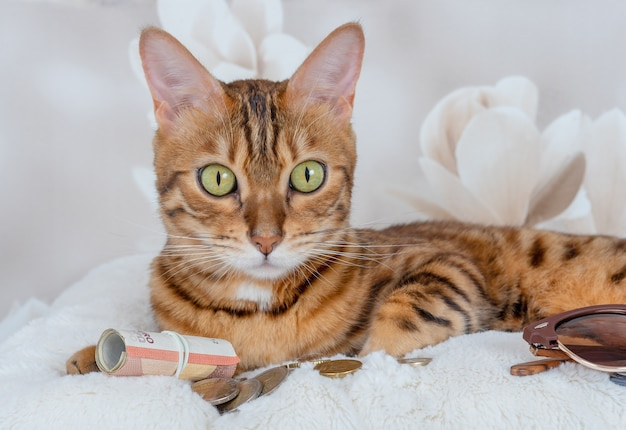 Domestic cat on a soft pillow with coins and euro bills