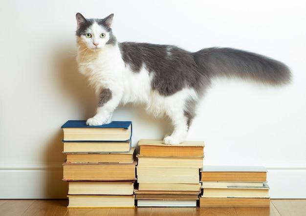 Домашняя кошка стоит на стопке книг
