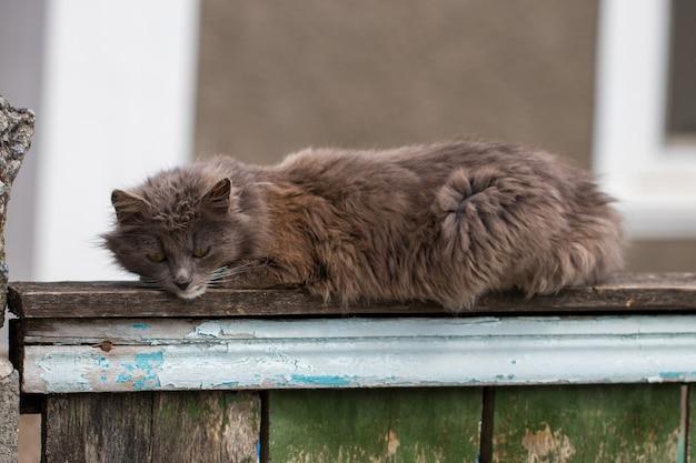 카메라를 응시하는 국내 고양이를 닫습니다.