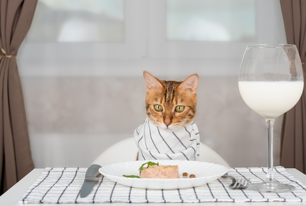 Domestic cat with bib at a served table with wet food and a glass of milk in the room