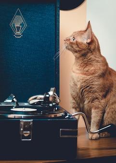 ビニールレコードを持つ飼い猫
