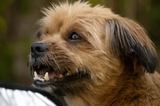 飼い犬の顔をクローズアップ
