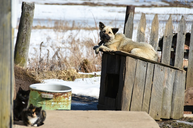 A domestic dog lies on a doghouse near a private wooden house in the village