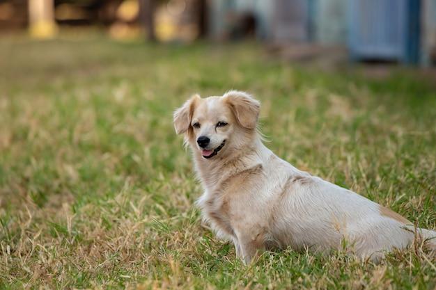 選択的に焦点を当てた農場の飼い犬