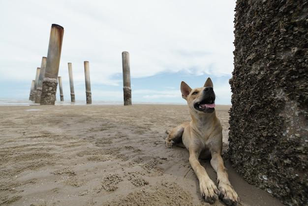 국내 개 휴식 및 모래 해변에서 휴식