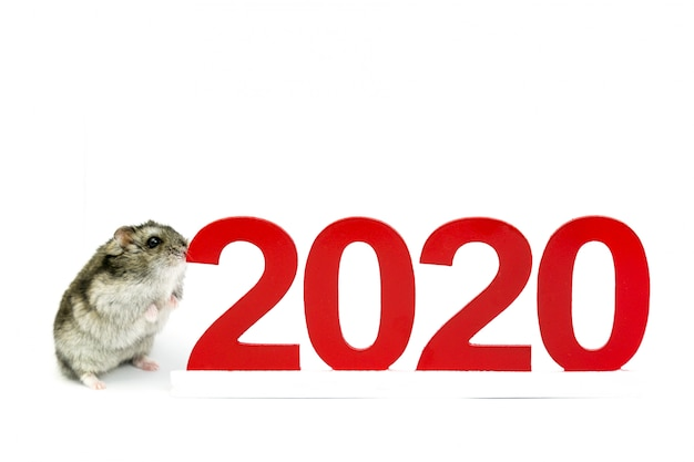 A domestic hamster costs around 2020.