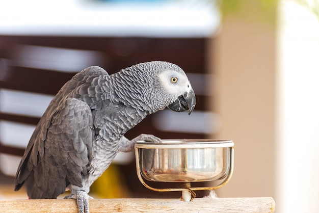 Domestic parrot in a kitchen