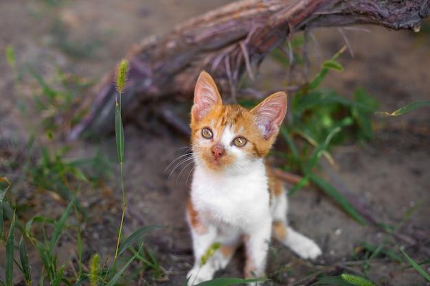 芝生の屋外で飼いならされたペット