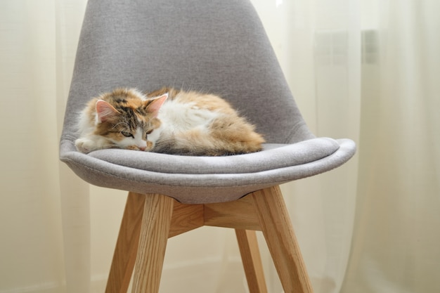 Domestic tricolor cat sleeping in chair near the window in room