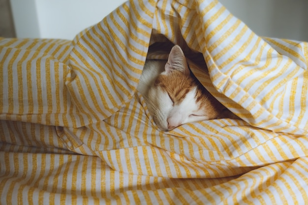 Domestic young orange tabby cat sleeping in bed